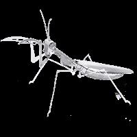 Picture of Praying Mantis