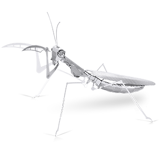 Picture of Praying Mantis