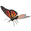 Picture of Monarch