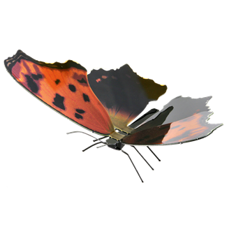 Picture of Eastern Comma