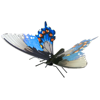 Picture of Pipevine Swallowtail